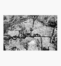 Twisted Wire Photographic Print
