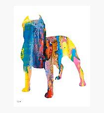 Pit Bull 4 Photographic Print