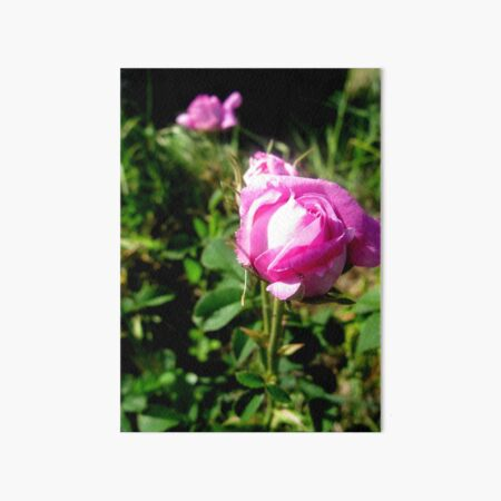Pretty in Pink Art Board Print