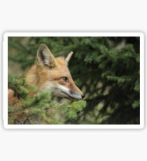 Backyard Fox Sticker