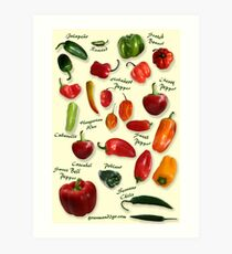 Chili Pepper Identification Art Print