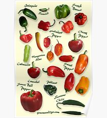Chili Pepper Identification Poster