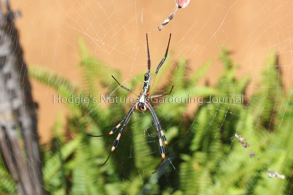 Orbweb Spiderling 2 by Hedgie's Nature & Gardening Journal