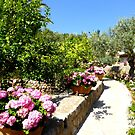 The Rose And Hydrangea Path by Fara