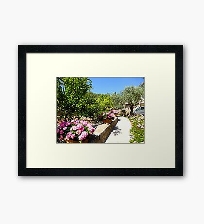 The Rose And Hydrangea Path Framed Print