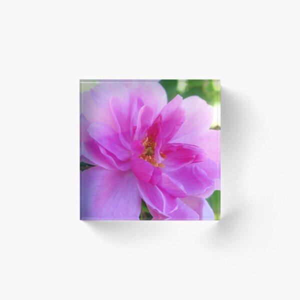 Absolute Beautiful Pink Rose Acrylic Block