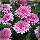 Pretty-in-Pink Summer Flowers by BlueMoonRose
