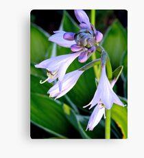 Lavender Bell Flower - k5935 Canvas Print