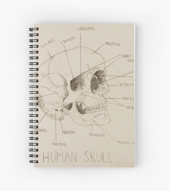 Cuadernos de espiral «Anatomía del cráneo humano» de baileehigart ...