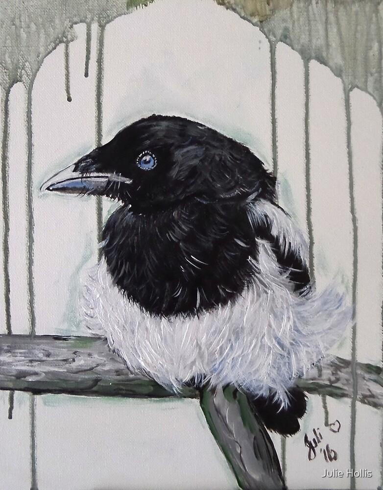 Baby Magpie by Julie Hollis