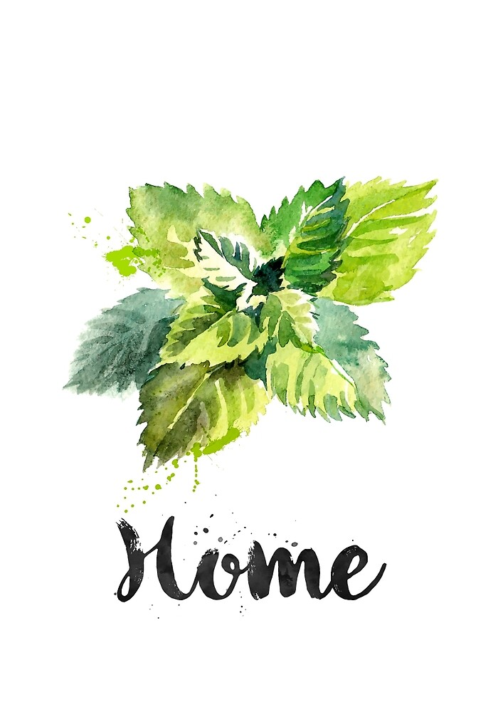 Mint. Home by found in  Atlantis