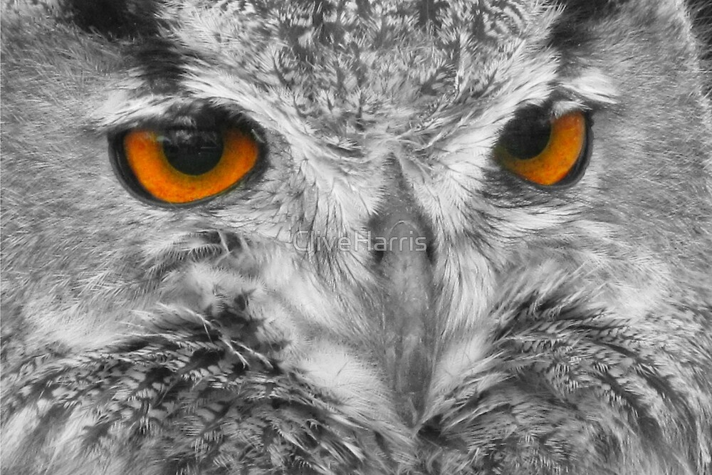 It's owl about the eyes! by CliveHarris