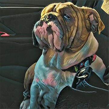 "English Bulldog: ""Joules Giving You the Stink Eye!"" by MissAlaneious"