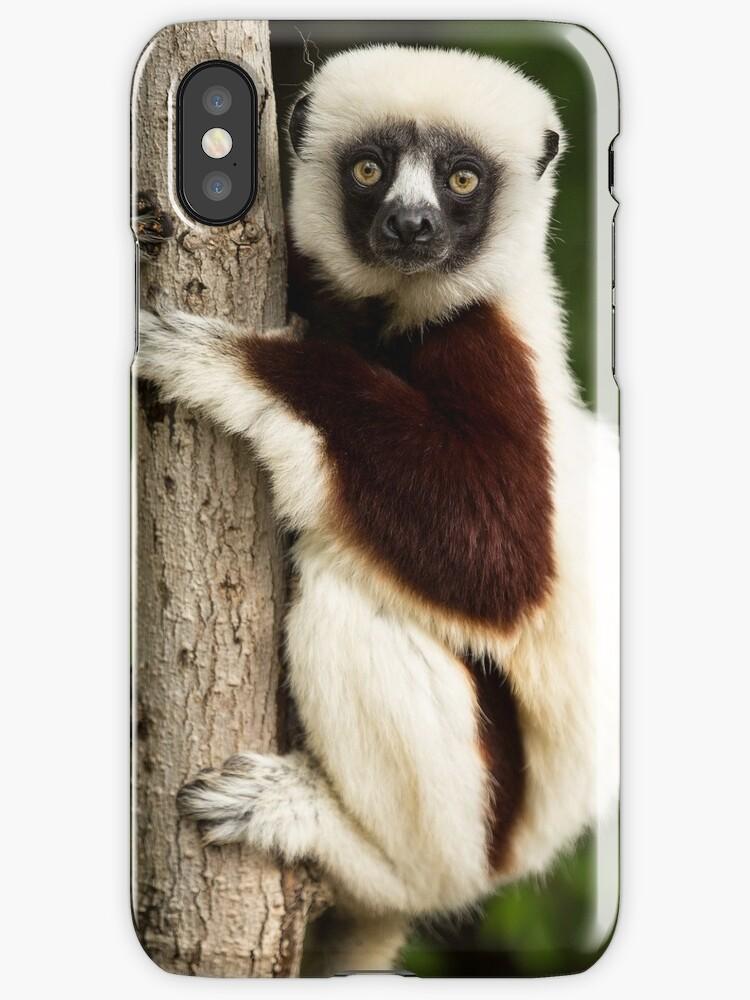 lemur by mehmetemin
