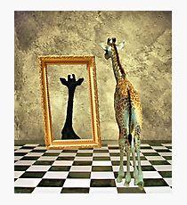 Giraffe Dreams Photographic Print