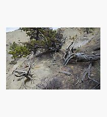 Twisted Dead Wood Photographic Print