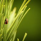 Ladybug Larva by Tracy Friesen