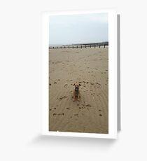 beach border terrier Greeting Card