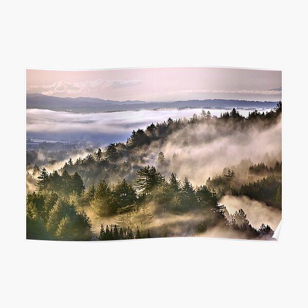 A foggy morning in the Santa Cruz Mountains Poster