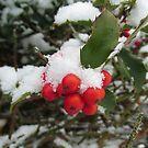 Holly Holy Snow by Monnie Ryan