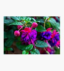 Violet Flowers - Nature Photography Photographic Print
