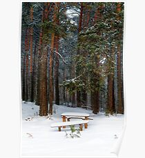 bench in winter forest Poster