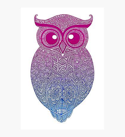 Gradient Owl Photographic Print