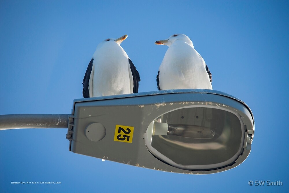 Larus Marinus - Great Black-Backed Gull - Silent Conversation | Hampton Bays, New York by © Sophie W. Smith
