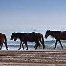 Wild Horses of Corolla Island by Jan Cartwright