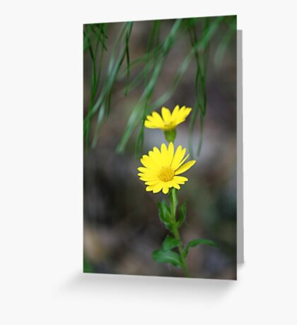 Itsy bitsy teeny weeny yellow Greeting Card