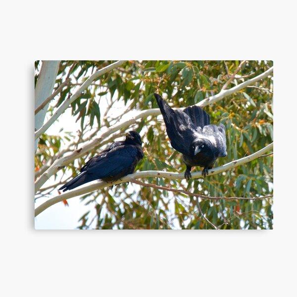 RAVEN ~ Forest Raven 6BJY9WG5 by David Irwin Canvas Print