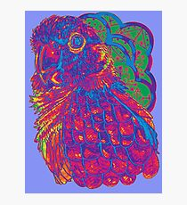 Summer Electric Conure Photographic Print