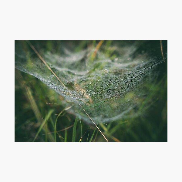 Misty Wonder Photographic Print