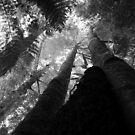 Deep Forest by petersargison