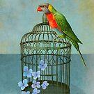 The Parrot by Sarah Jarrett