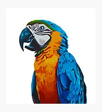 Parrot colorful nature animal Photographic Print