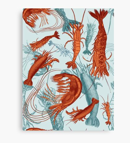 Shrimp - Orange and Turquoise Canvas Print