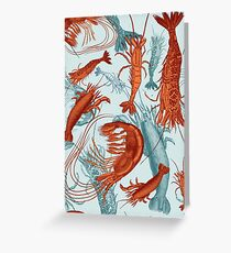 Shrimp - Orange and Turquoise Greeting Card