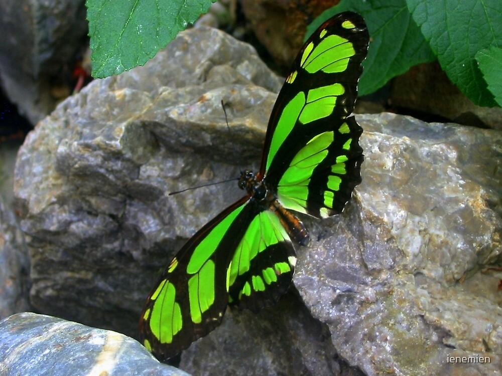 Quot Green Butterfly On Rock Quot By Ienemien Redbubble