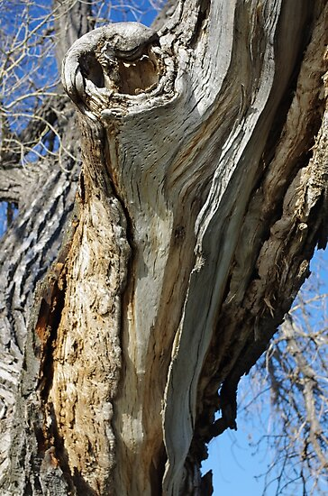 Barkless Cottonwood Branch by MsSexyBetsy