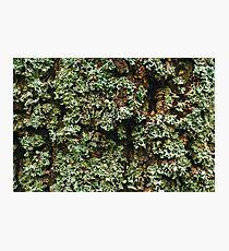 Nature Background Photographic Print