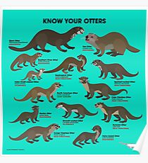 Know Your Otters Poster