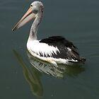 Pelican Cruising the Lake by Trish Meyer