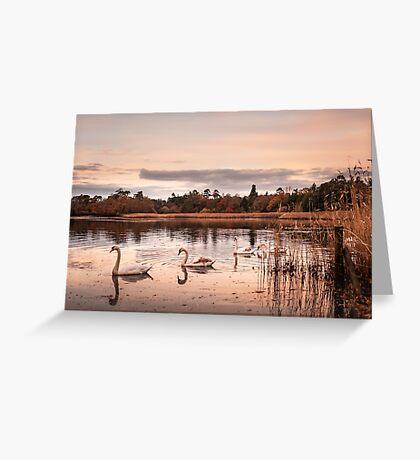 Swans Greeting Card