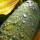 Gathered Drops by petersargison
