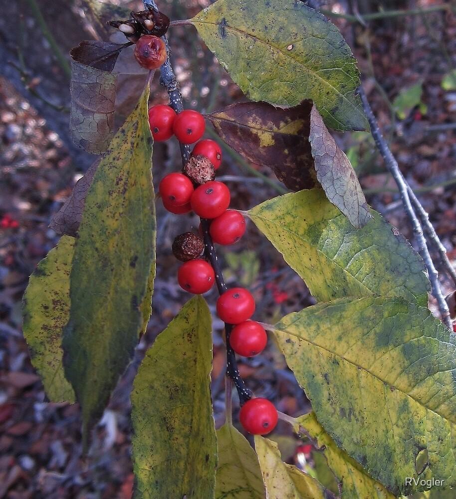 Berry Red by RVogler