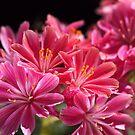 Glowing Pink Delight by Joy Watson