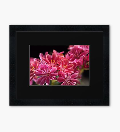 Glowing Pink Delight Framed Print