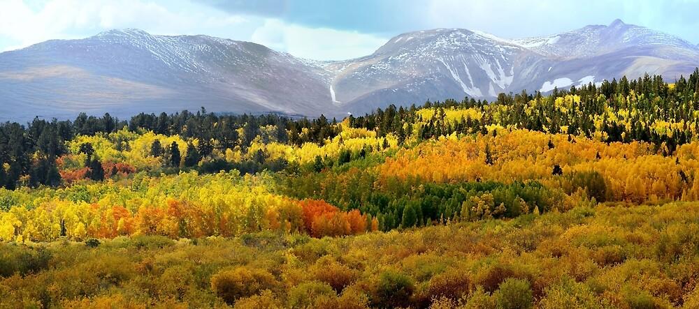 Colorado Landscape by LENA OWENS @OLena Art