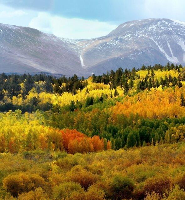 Colorado Landscape by OLena Art - brand